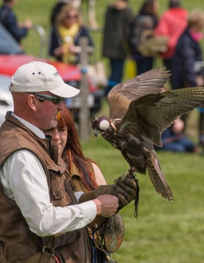 Sussex Falconry_4